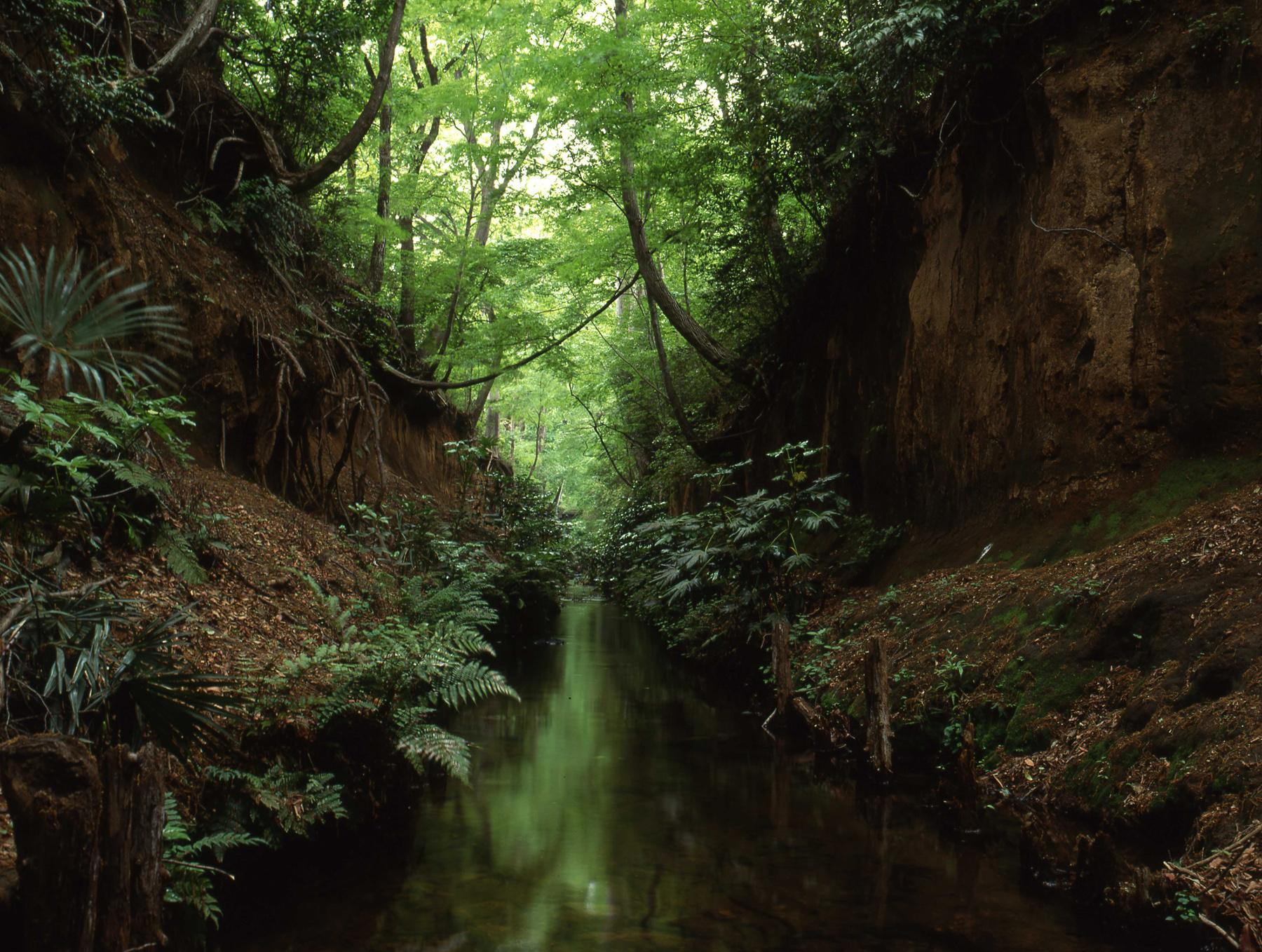 第5回 玉川上水46億年を歩く ショートウォーク